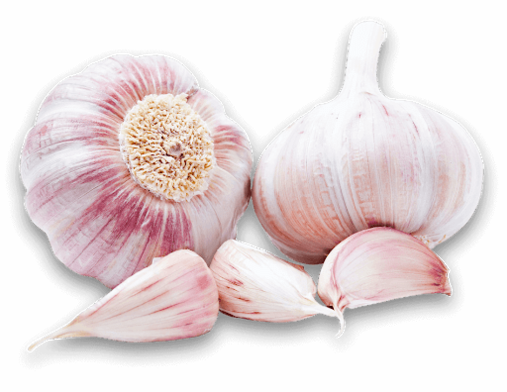 Knoblauch Rose